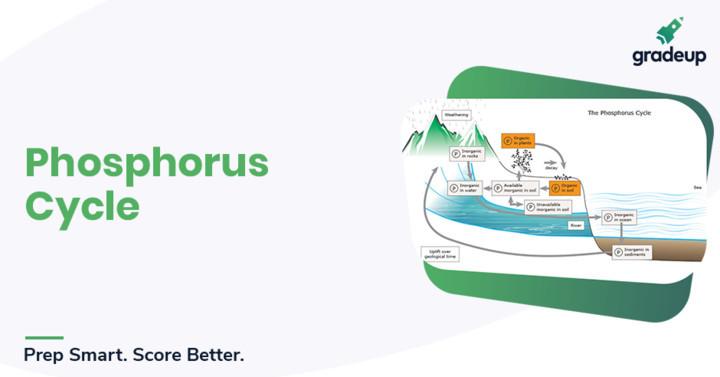 Phosphorus Cycle Notes (Hindi & English)