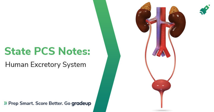 State PCS Notes: Human Excretory System