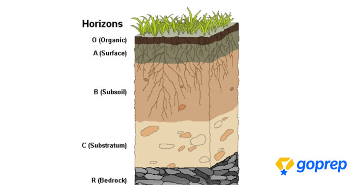 Soil Profile: Different Layers of Soil Profile